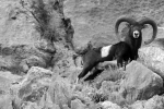 kzanetic_wildlife_0003