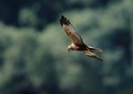 kzanetic_wildlife_0040